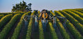 Vineyard landscape spraying of grapevines vineyard south west of france bordeaux Royalty Free Stock Photography