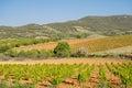 Vineyard landscape in spring. Royalty Free Stock Photo