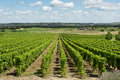 Vineyard landscape view of in france Stock Photography
