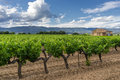 Vineyard in the luberon provence region Royalty Free Stock Images