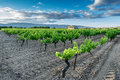 Vineyard in the luberon provence region Stock Photos