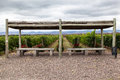 Vineyard in Mendoza Argentina Royalty Free Stock Images