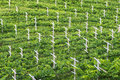 Vineyard minimal tillage practice in bird eye s view Stock Images