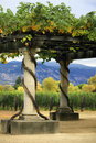 Vineyard Napa in California. Stock Image