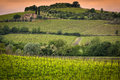 Vineyard near montalcino tuscany italy in Stock Photos