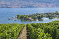 Vineyard Overlooking Okanagan Lake Kelowna BC Canada Royalty Free Stock Photo