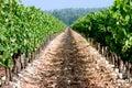 Vineyard Path Royalty Free Stock Photo