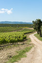 Vineyard and path in tuscany of the famous wine ornellaia italy Stock Photo