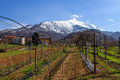 Vineyard at piemonte in the early spring in on the foot of the bisalto near peveragno cuneo italy Royalty Free Stock Photography