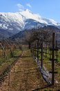 Vineyard at piemonte in the early spring in on the foot of the bisalto near peveragno cuneo italy Royalty Free Stock Photo