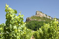 Vineyard, Roche de Solutre. France. Royalty Free Stock Photo