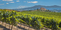 Vineyard with rows of grapes castle overseeing vineyards from a hill on a clear summer day Stock Images