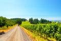 Vineyard In Rural Oregon