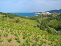 Vineyard and sea Stock Image
