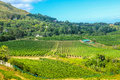 Vineyard South Africa Royalty Free Stock Photo