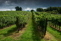 A vineyard south moravia czech republic Stock Photo