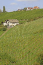 Vineyard in south styria austria Stock Photos