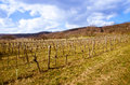 Vineyard in spring time Royalty Free Stock Photo