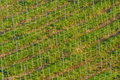 Vineyard in Spring Royalty Free Stock Photo