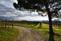 Vineyard on a stormy day Royalty Free Stock Photo