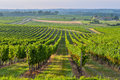 Vineyard sunrise bordeaux vineyard france aquitaine gironde Stock Photo