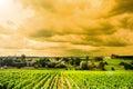 Vineyard sunrise landscapes bordeaux Stock Photos