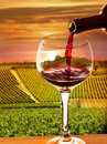Vineyard in the sunset Royalty Free Stock Photo