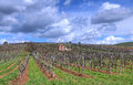 Vineyard in Tokaj Royalty Free Stock Image
