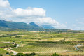 Vineyard valley at rioja, spain Royalty Free Stock Photo
