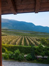 Vineyard via a farm house landscape in italy the famous wine producing industry Royalty Free Stock Photo