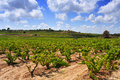 Vineyard view of a with ripe grapes in catalonia spain Stock Photography