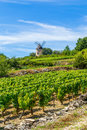 Vineyard and Windmill Royalty Free Stock Photo