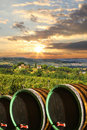 Vineyard with wine barells in Chianti, Tuscany Stock Image