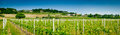 Vineyard winery panoramic view spring near udine friuli italy Royalty Free Stock Photo