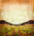 Vineyard In Winter On A Grunge...