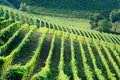 Vineyards Royalty Free Stock Images