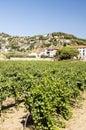 Vineyards of Alella Royalty Free Stock Photo