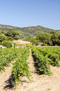 Vineyards of Alella Royalty Free Stock Photo