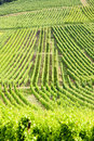 Vineyards, Alsace Royalty Free Stock Images