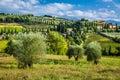 Vineyards amd olive trees in tuscany italy Royalty Free Stock Photo