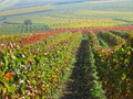 Vineyards in autumn colors Royalty Free Stock Photos