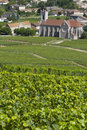 Vineyards in Burgundy, France. Royalty Free Stock Image