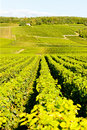 Vineyards, Burgundy, France Stock Photo