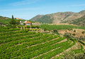 Vineyards in douro valley landscape of a near the river a porto wine growing region portugal Royalty Free Stock Image