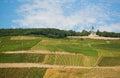 Vineyards and Germania monument in Rudesheim Royalty Free Stock Photo