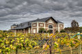Vineyards hdr in grapevine texas showing clouds grapevines and building Royalty Free Stock Image