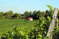 Vineyards on a hill with a cute little house, blue sky Royalty Free Stock Photo