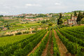 Vineyards on hillside a in tuscany italy Stock Image