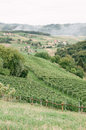 Vineyards hillside with in zagorje croatia Royalty Free Stock Photos