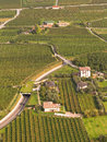 Vineyards in Italy - Aerial view Stock Image